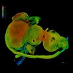 Firefly Central Nervous System